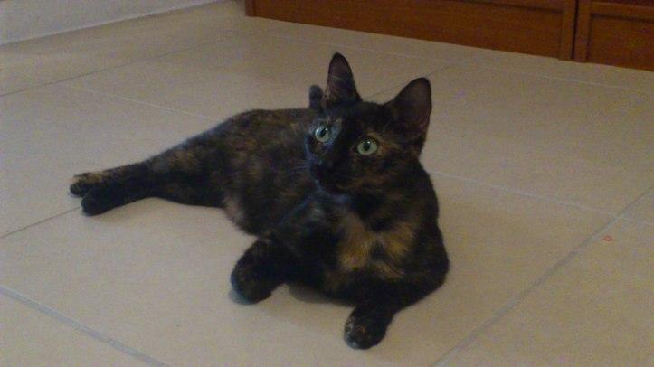 Et tiens en parlant de chat je vous présente mon bébé, ma Curly à moi ! <3